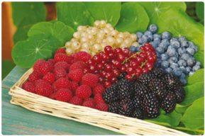 """Conoce los beneficios de los """"Berries"""""""