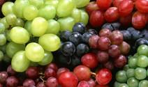 Los ácidos grasos y los taninos en la nutricion