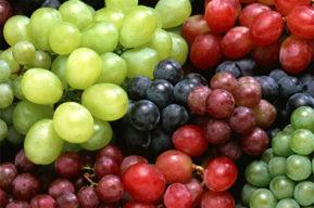 Los ácidos grasos y los taninos en la nutrición