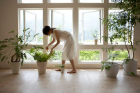 Plantas de interior para decorar tu hogar