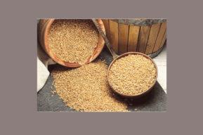 Incluir salvado de trigo y de avena en la dieta