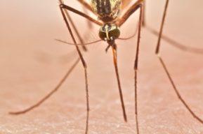 ¡Adiós a los mosquitos! Cómo evitar los mosquitos este verano.
