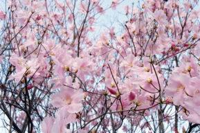 Cómo disfrutar del embarazo en primavera