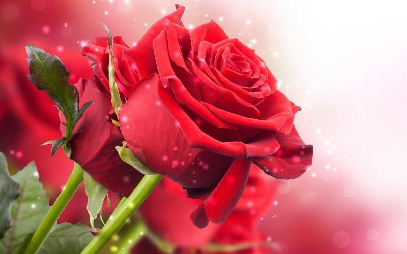 8 regalos que puedes hacerte a ti misma en el Día de la Madre