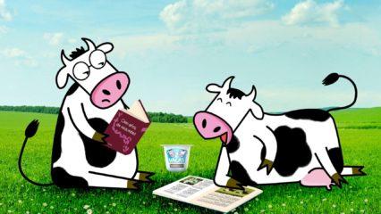Yogures ecológicos para comer más sano