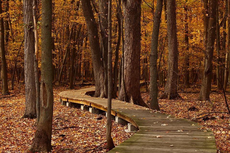 Seis beneficios saludables del otoño