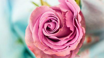 Seis emociones contadas a través de un perfume