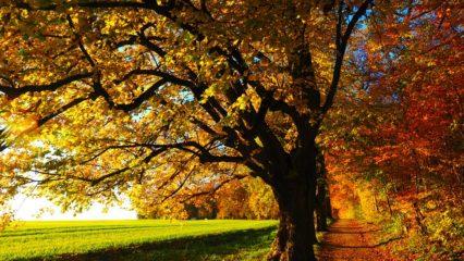 10 razones para pasear cada día