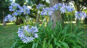 Cómo renovar el jardín antes del verano