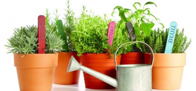 5 Consejos para cultivar hierbas y plantas aromáticas en casa