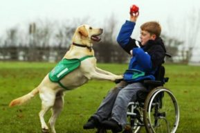 Terapia con animales ayuda a niños con enfermedades