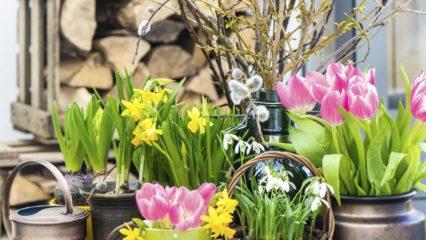 Renueva la casa en primavera con plantas y flores